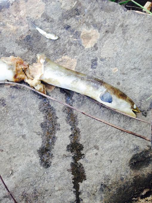 unionriver_eel&herring